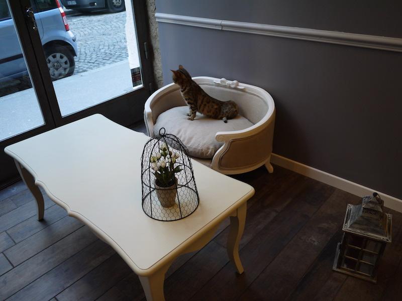 bar à chats à lyon