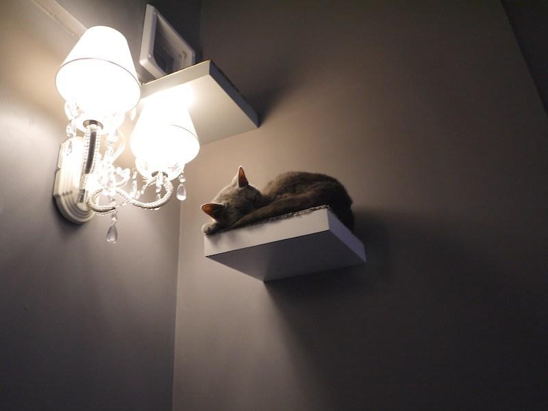 bar chats-lyon