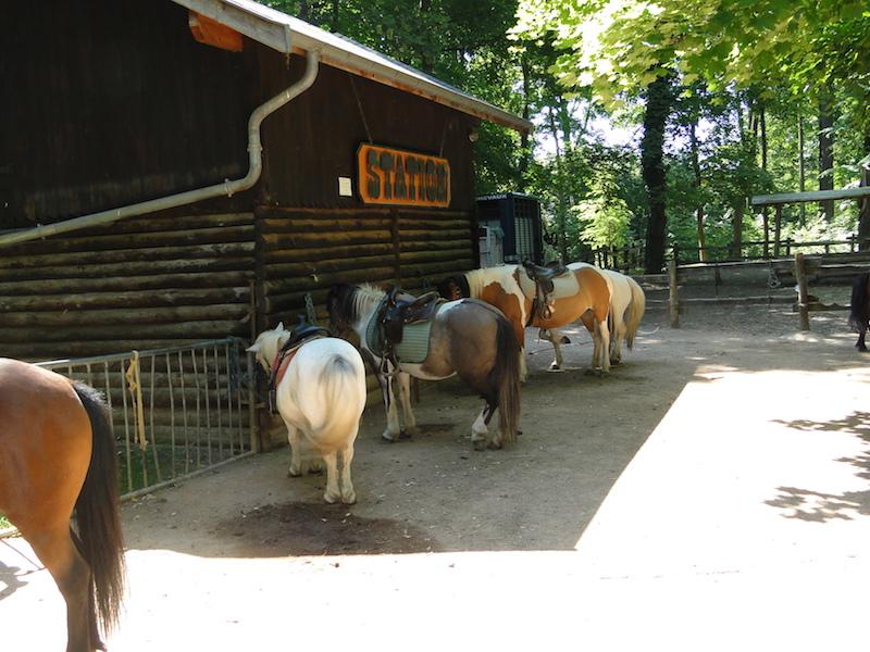 poney lyon