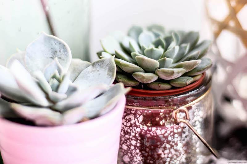 végétaliser son intérieur avec plantes faciles à entretenir