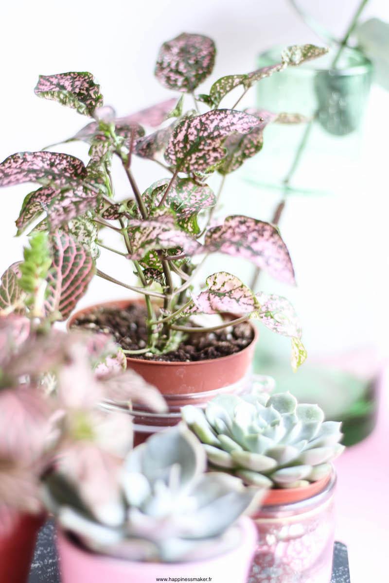 Créer une déco végétale avec des plantes faciles à entretenir