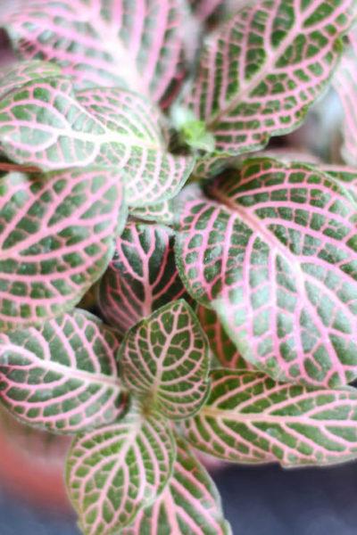 Déco green : Mes jolies petites plantes d'intérieur