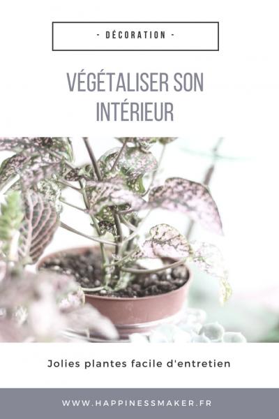 Végétaliser son intérieur avec des plantes faciles à entretenir
