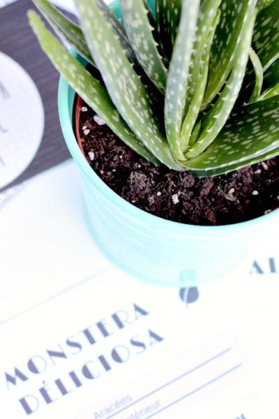 Plants Tracker : Fiche suivi de mes plantes à imprimer // Freebie