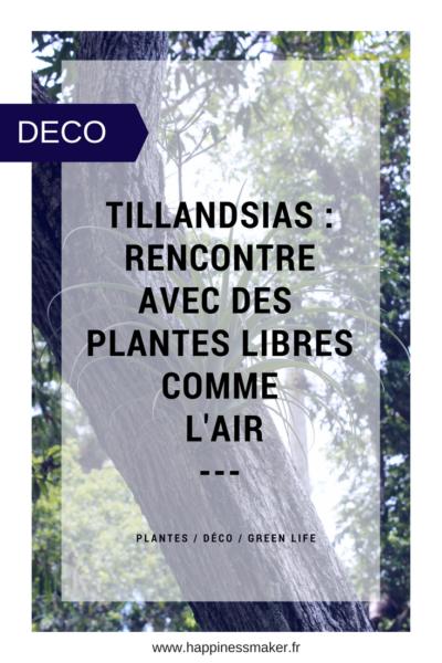 Tillandsia plantes sans racines filles de l'air