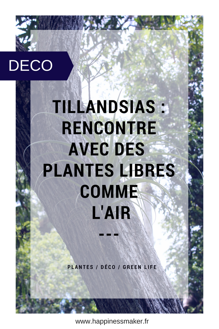 Les Filles De L Air Plante tillandsia : une plante sans racines libre comme l'air