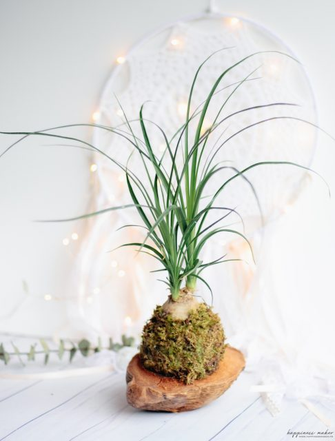 kokedama plante int rieur d co originale happiness maker