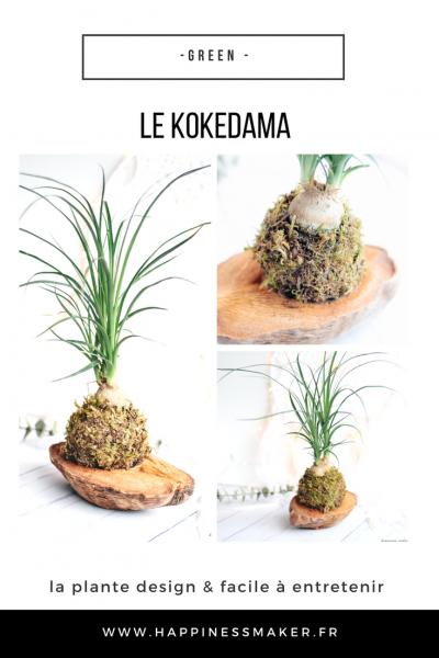 Le kokédama : La plante déco et facile d'entretien !