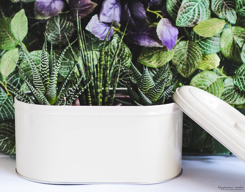 déco végétale plantes grasses
