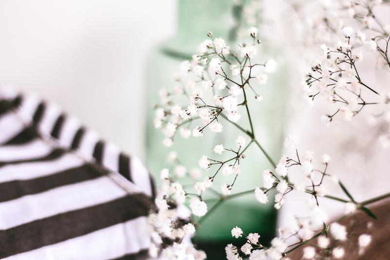 minimal flowers free photo