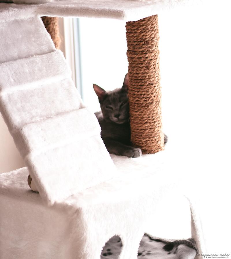 gaia chaton