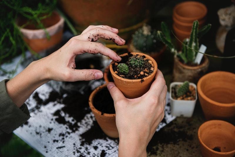 activité manuelle détente jardinage