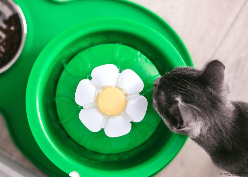 catit fontaine à eau pour chat avis test