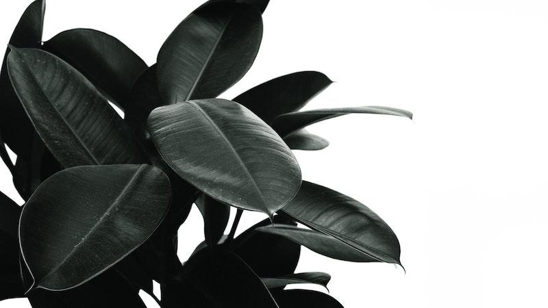 acheter des plantes en ligne avis