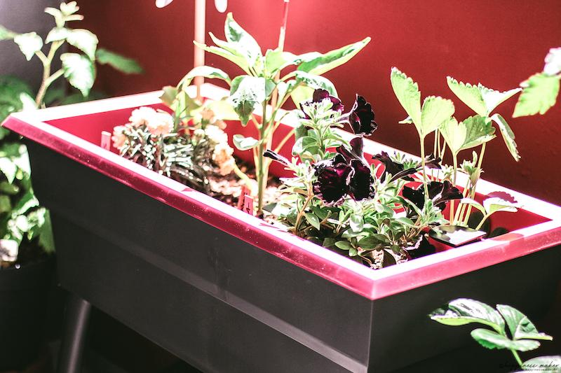Un Petit Potager Sur Mon Balcon Avec La Jardiniere Calipso