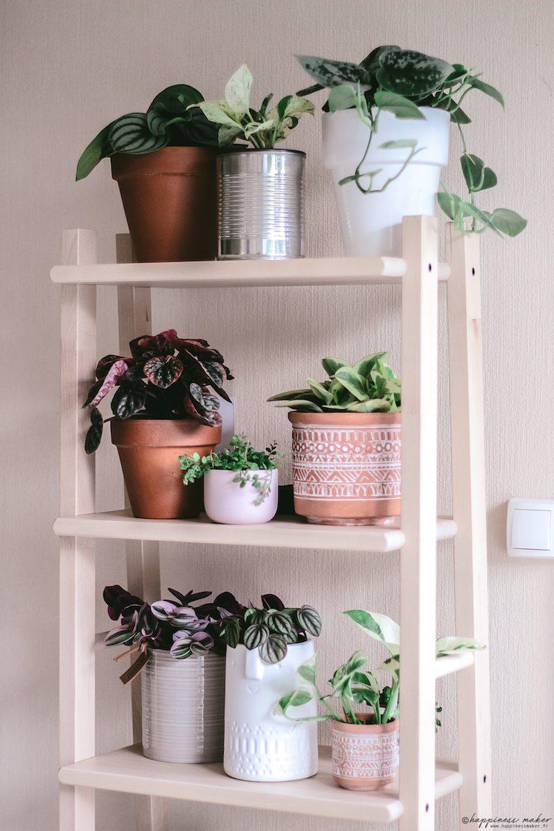 bien entretenir ses plantes d'intérieur astuces conseils