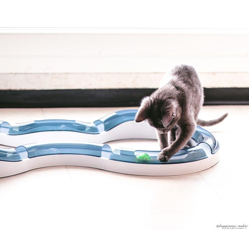 circuit sense cat it jouet préféré chat