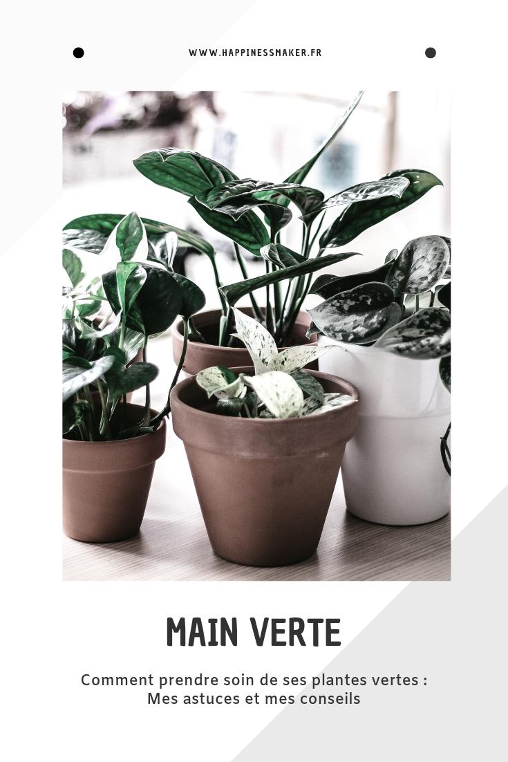 Plante Exterieur Qui Aime L Eau comment avoir la main verte et prendre soin de ses plantes