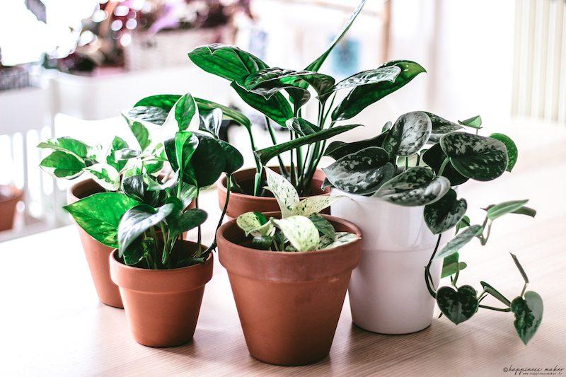 conseil entretien plantes pour avoir la main verte
