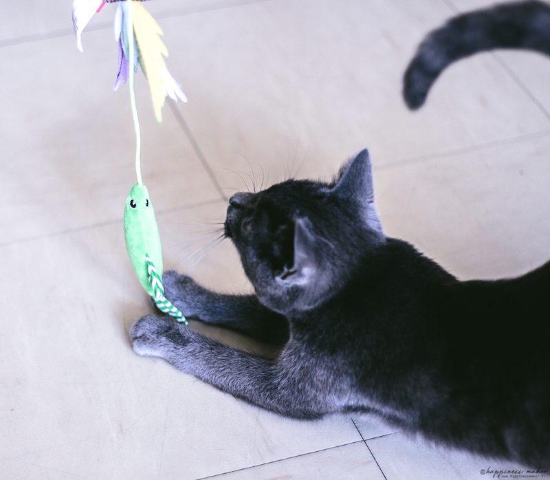 jouet canne a peche pour chat