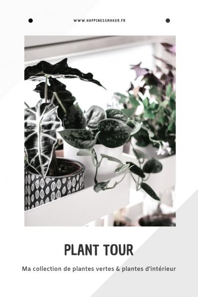 plant tour collection de plantes vertes