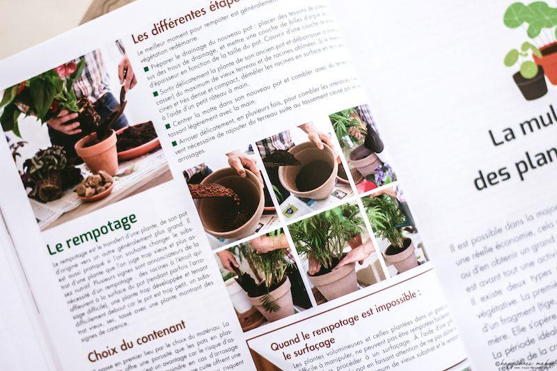 rempotage tuto livre plantes dinterieur horticolor