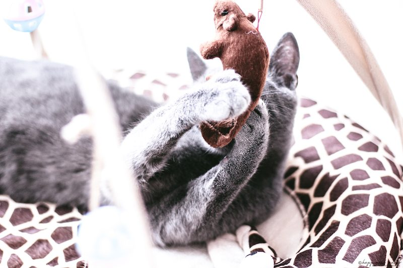 tapis jouet pour chat