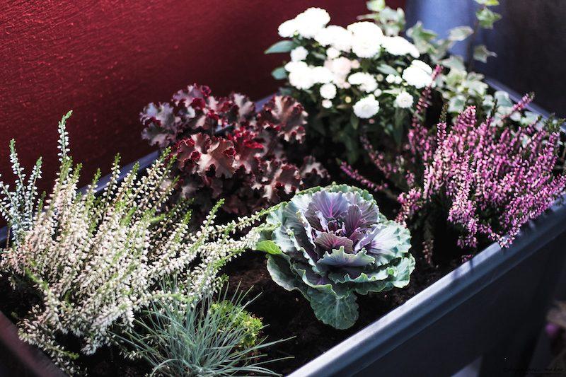 jardinière d'automne pour balcon plantes idées