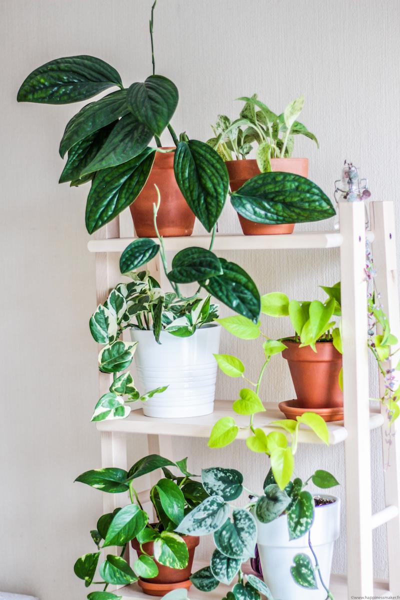 étagère pour plantes pas chere