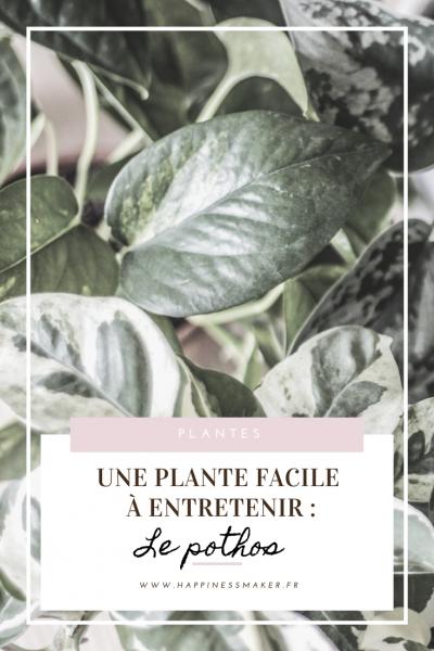 plante facile entretenir pothos