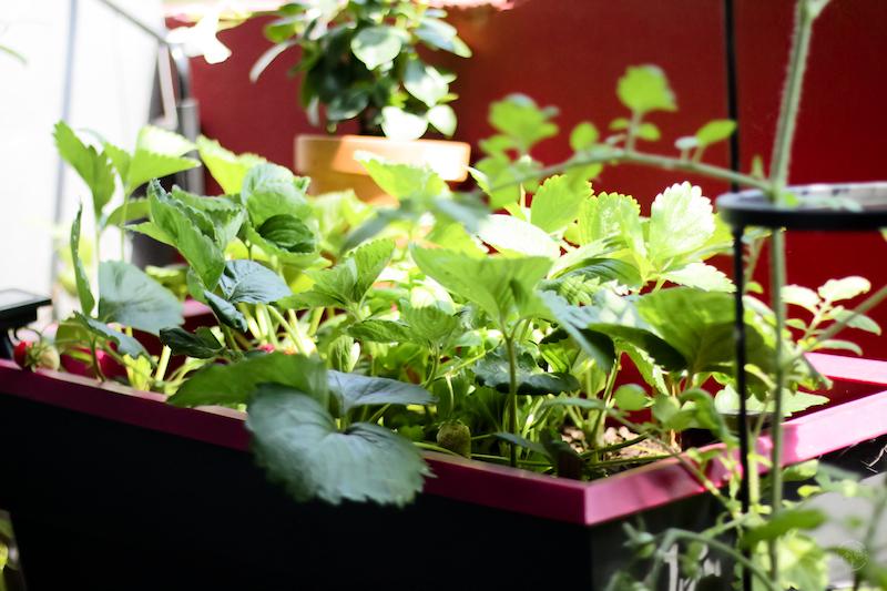 jardinière balcon réserve deau