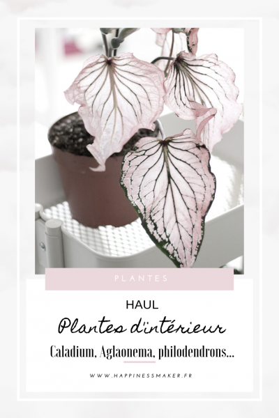 caladiums philodendron verrucosum et moonlight plantes